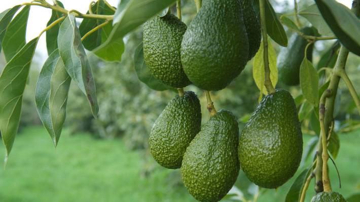 10 Reasons Why Exporting Avocado did not work for us – Twiga Foods Founder
